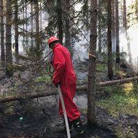 Brandmän bekämpar en skogsbrand i Öje