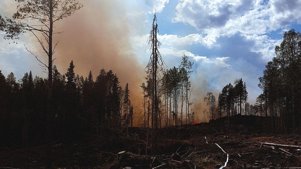 rök stiger ur skogen, svärtat hygge