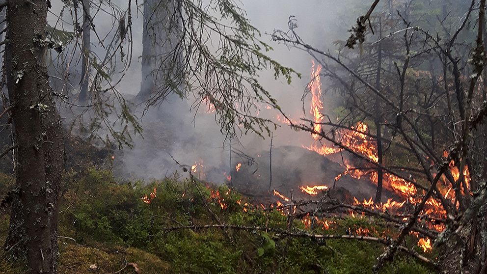 nära bild på brinnande mark och grenar i skogen