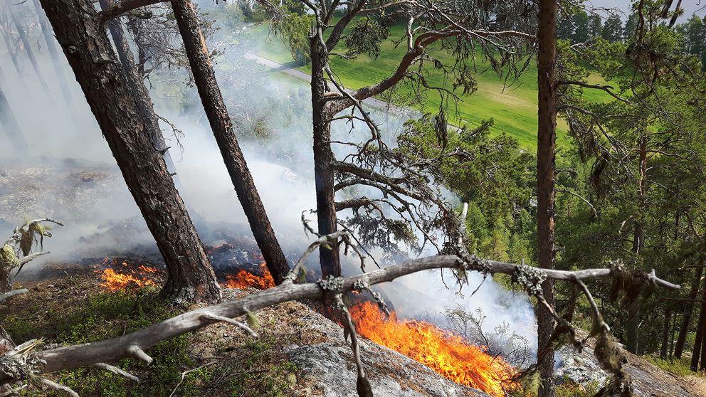vy nerför klippstup med träd, brinner i marken