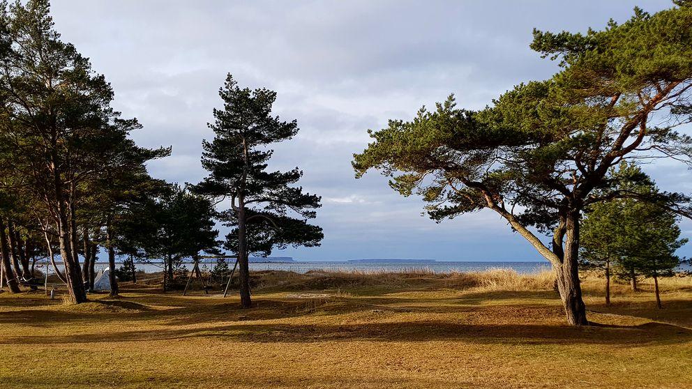 Solen skiner Björkhaga på Gotland.