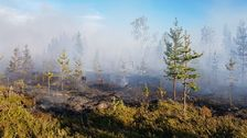 rykande mark i gles skog