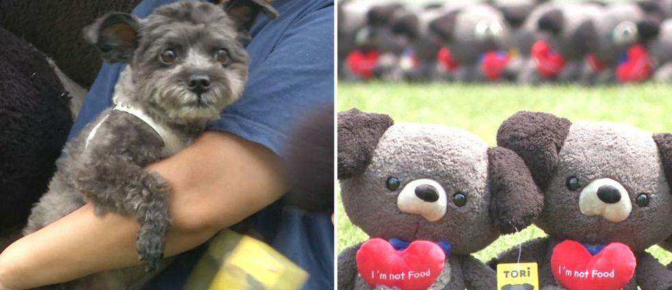 """Presidenthunden Tori och gosedjurshundar med hjärtan där det står """"I'm not food"""""""