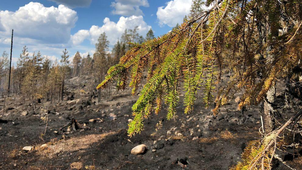 Skogsbrand vid Högbränna i Nordmalings kommun.
