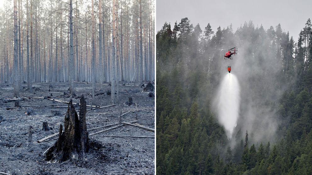 Två bilder, en från skogen kring Ängra, och en bild på en helikopter som hämtar vatten i sjön Grötingen.