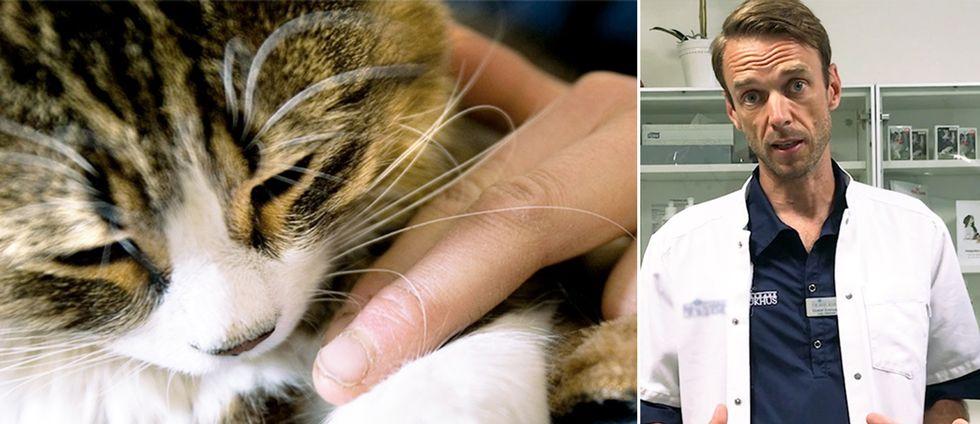 Veterinären Gustaf Svensson om vad som är viktigast att tänka på för den som tar hand om sällskapsdjur i hettan.