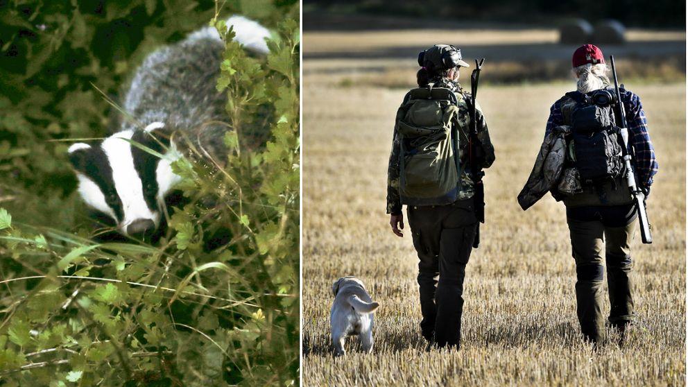 90 aring korde ihjal hund misshandlades av hundagaren