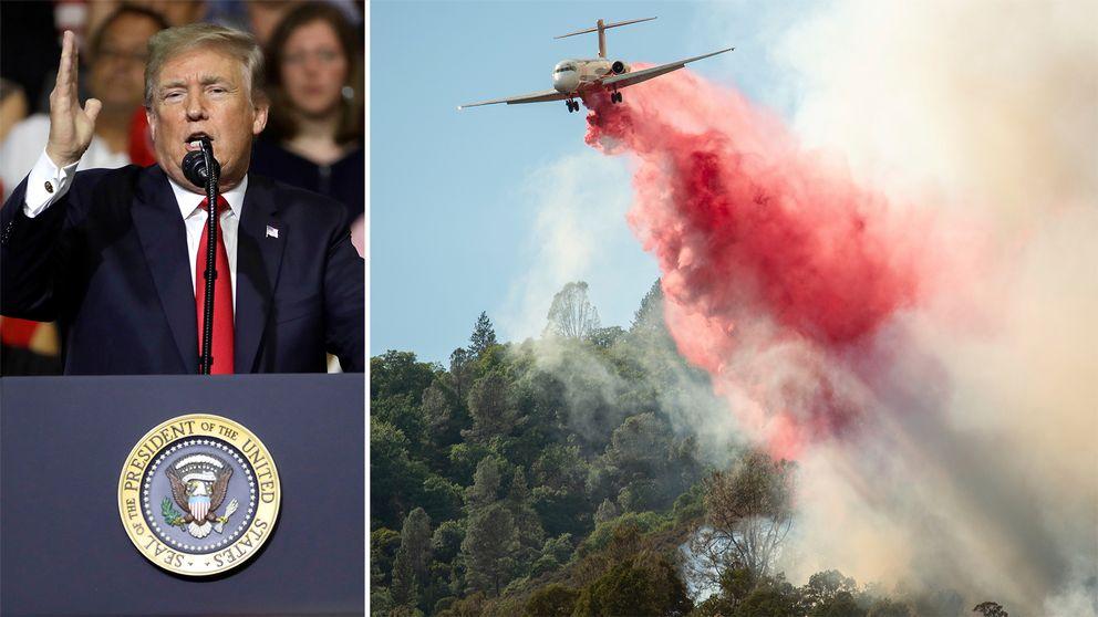 Splitbild. Till vänster Donald Trump som håller ett tal, bild två ett flygplan som vattenbombar.