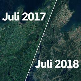 Två kartor, en grön och en brun. Visar på torkan.