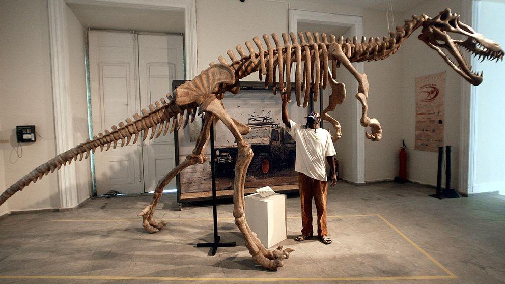 Skelettet av en Suchomimus dinosaurie