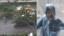 En kvinna som flyr vindarna i Hong Kong när orkanen drog in över staden under söndagskvällen. Till vänster träd som fallit över bilar i samma stad.