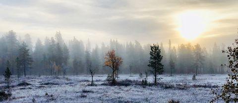 Trollsk morgon i Arjeplog