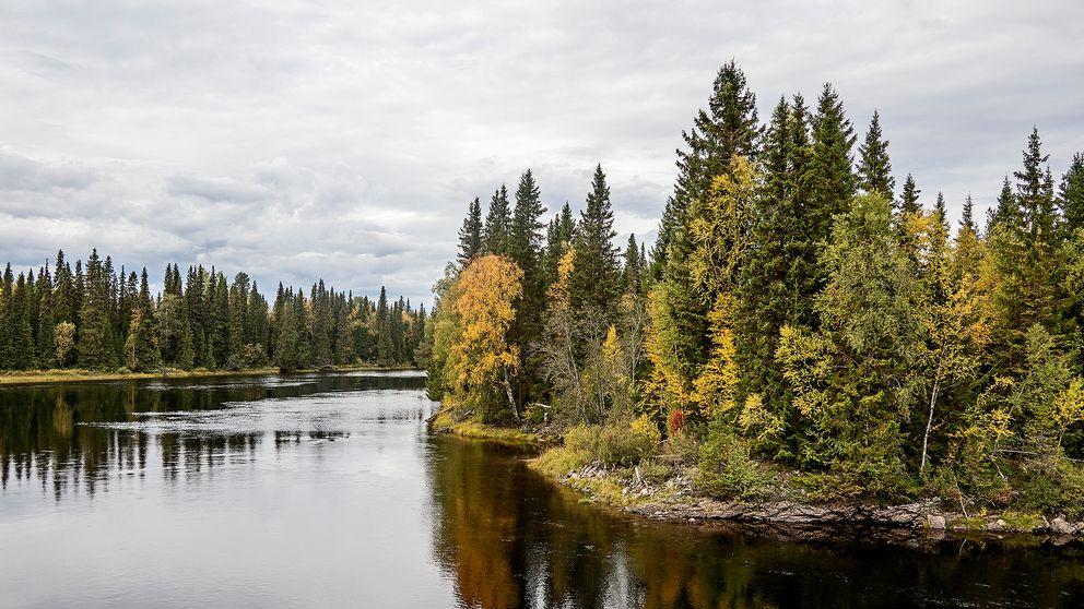Ett vattendrag som flyter stilla mot en natur som skiftar i gult.