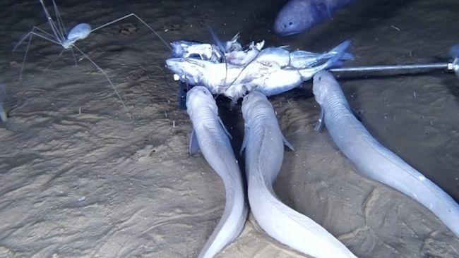 Hittade jesus pa fisk