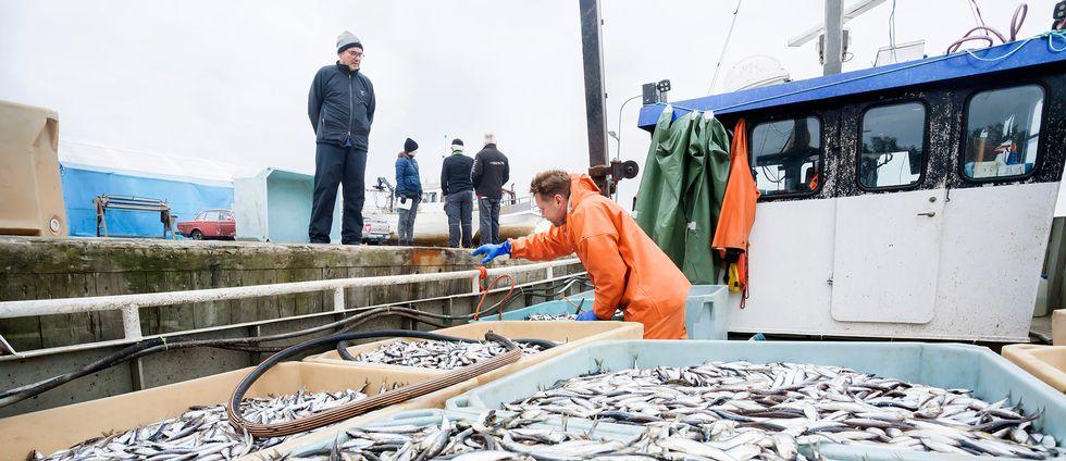 fiskebåt, behålalre med små fiskare, personer som arbetar