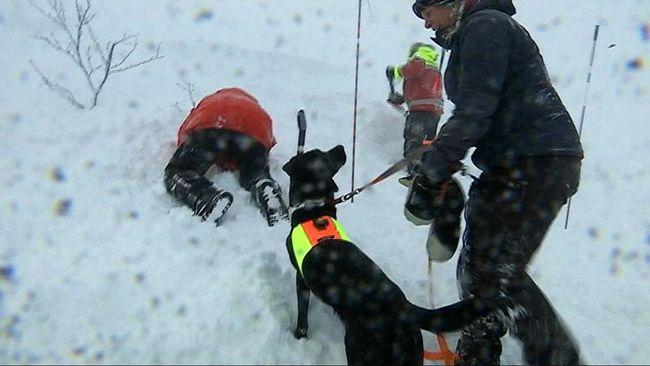 Lavinhundar tränar i jämtländska Bydalen