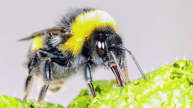 Hungry bumblebees make the flowers bloom - Teller Report