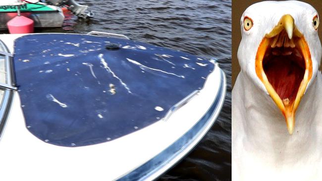 Måsar skitar ner i hamnen – nu slår båtägarna tillbaka