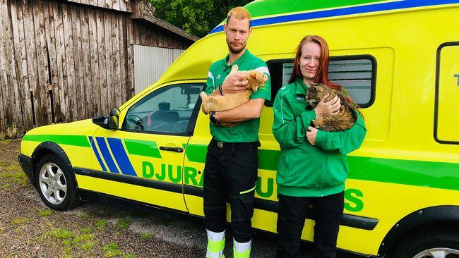 Djurambulansen i Halland firar ett år – här är teamet som räddar djuren