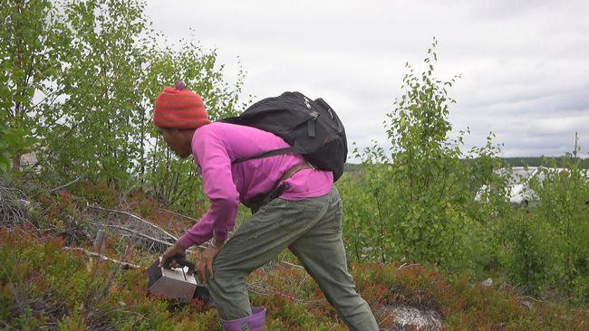 Bärplockare välkomna till Sverige igen – på särskilda villkor