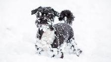 närbild pigg liten hund i snö