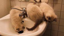 kattugnar sitter på handfat