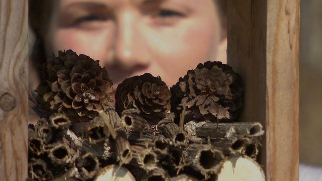 kottar och pinnar i träram, kvinnas ansikte bakom
