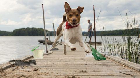 Glad, springande hund på brygga.