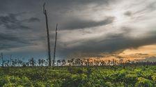 Regnskogen på Borneo till hör de äldsta och mest artrika skogarna i världen.