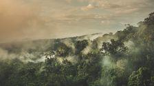 Regnskogen på Borneo bränns ner för att skapa ny odlingsmark eller ge plats åt oljepalmer.
