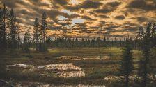 Muddus är en nationalpark i Lappland.