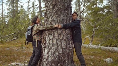 Två män kramar en jättestor tall.