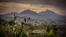 Volcans National Park i Rwanda.
