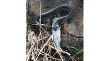 Orm har fångat en fisk.