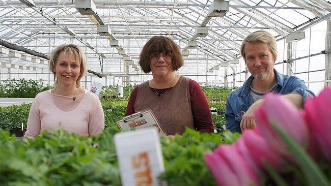 Plus expertpanel till plantjordstestet. Ylva Landerholm, trädgårdsexpert i God morgon Sverige, Jonas Berring, trädgårdsentusiast och Sonja Marklund, hortonom och före detta trädgårdslärare.