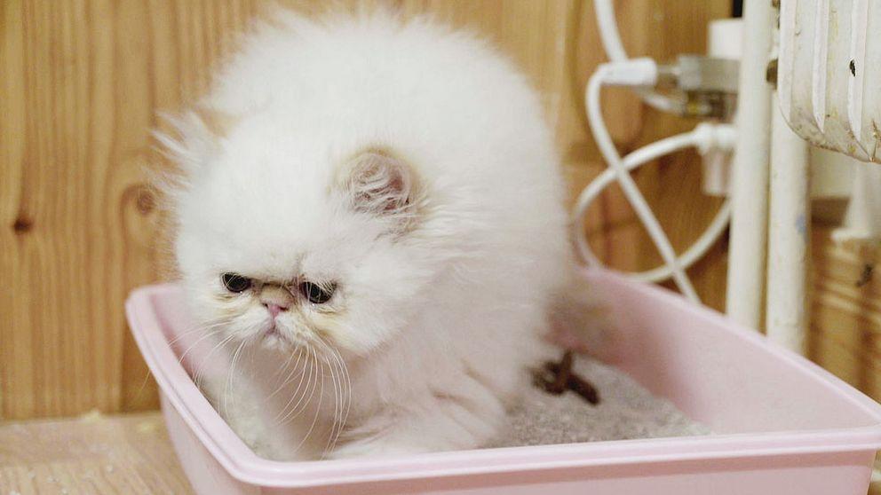Fy katten vilken soppa