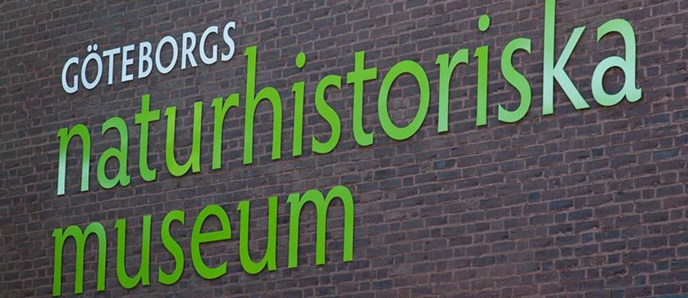 Hur mänskliga kvarlevor ska hanteras väcker etisk debatt på Naturhistoriska museet i Göteborg.