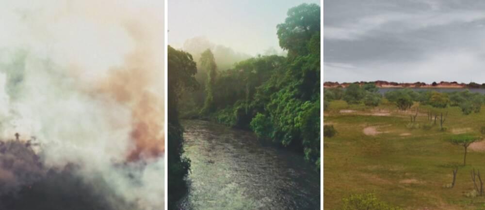 Tre bilder från Amazonas: rökmoln över trädtoppar, flodbädd kantad av grönska, simulering av hur savannområde i regionen kan komma att se ut.