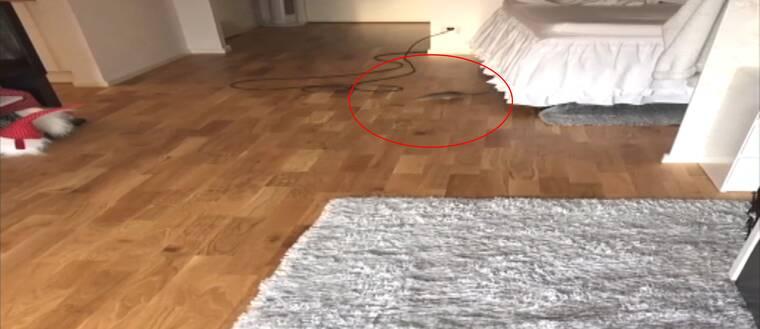 Svt var hennes vardagsrum