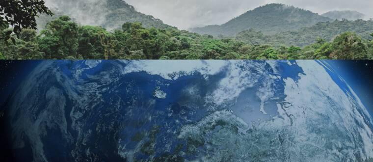 Regnskog, polarisar och ett jordklot