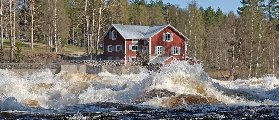 Full fart på Vindelälven genom Vindeln i Västerbotten den 13 maj.
