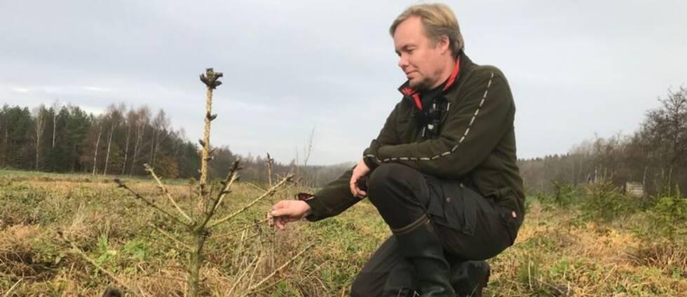 Roger Bengtsson inspekterar en av sina många döda rödgranar.