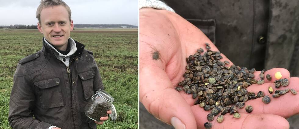 Philip Hedeng är lantbrukare i Halmstad kommun. I vår blir första gången han odlar linser.