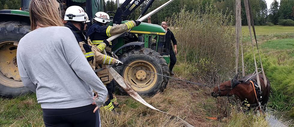 Traktor firar upp häst ur dike