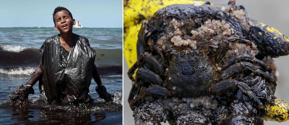 Oljeutsläppet förstör stränder och dödar strandlevande djur