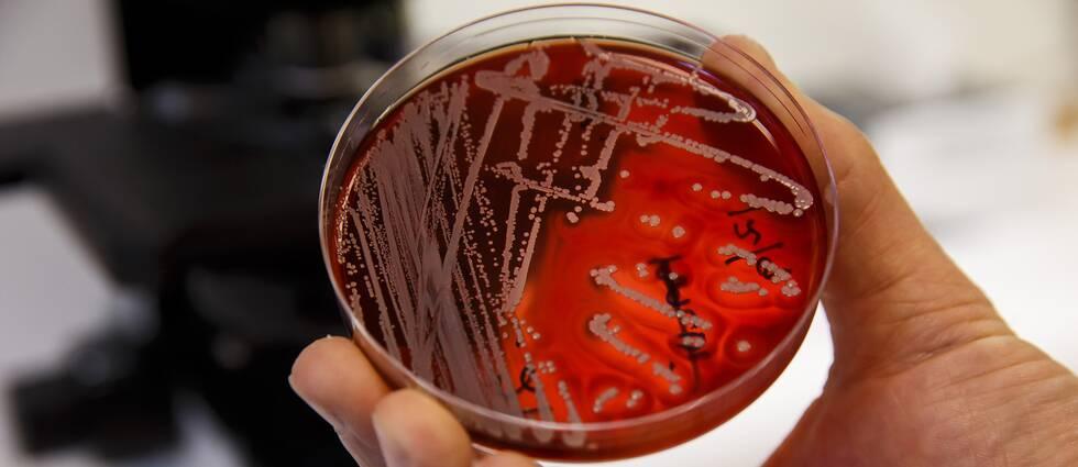 Att bekämpa antibiotikaresistenta bakterier är något som måste ske internationellt och det måste skapas incitament för läkemedelsföretag att vilja utveckla nya läkemedel i kampen.