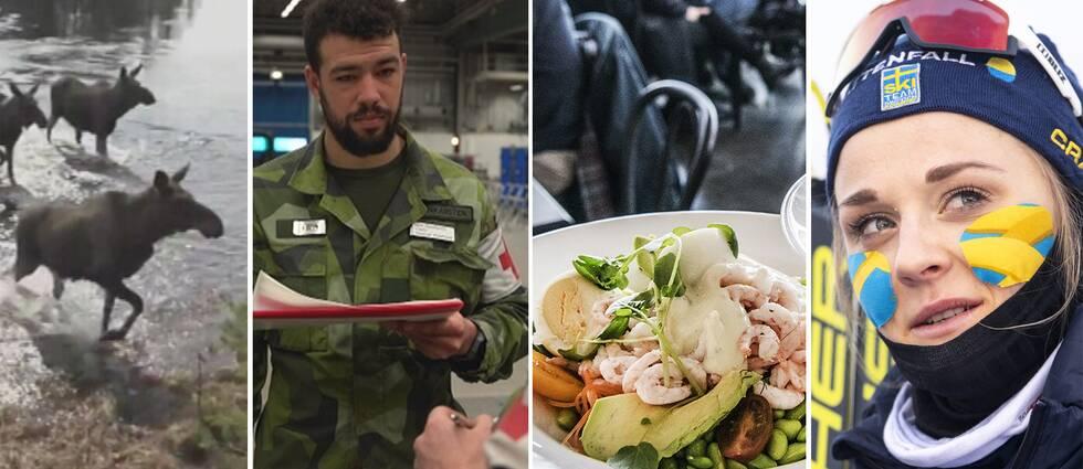 Älgar, en av Försvarsmaktens anställda, räksallad och Stina Nilsson.