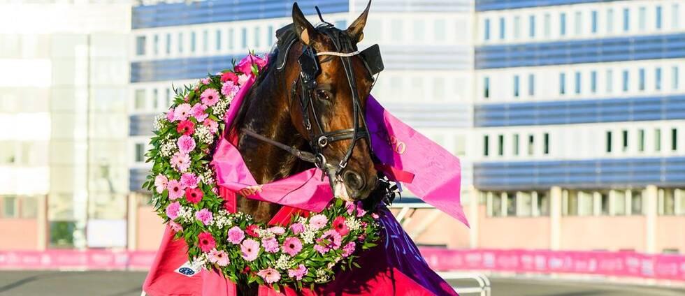 Hästen Propulsion efter vinsten i Elitloppet.
