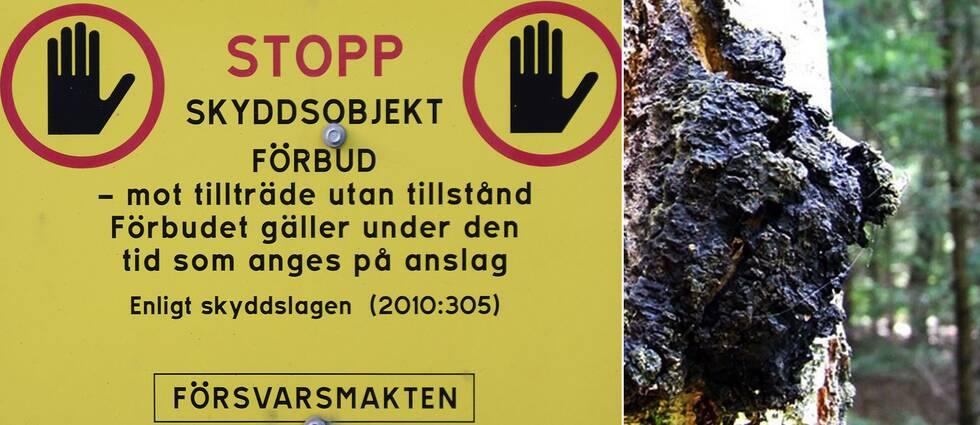 närbild på förbudsskylt från försvarsmakten, samt tre små bilder från skogsbilväg med skyltar
