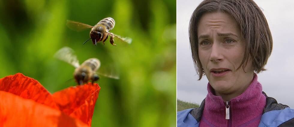 Dubbelbild. Till vänster två bin som är på väg att landa på en röd vallmo. Till vänster en intervjubild på en brunhårig kvinna mer rosa tröja och blå jacka.